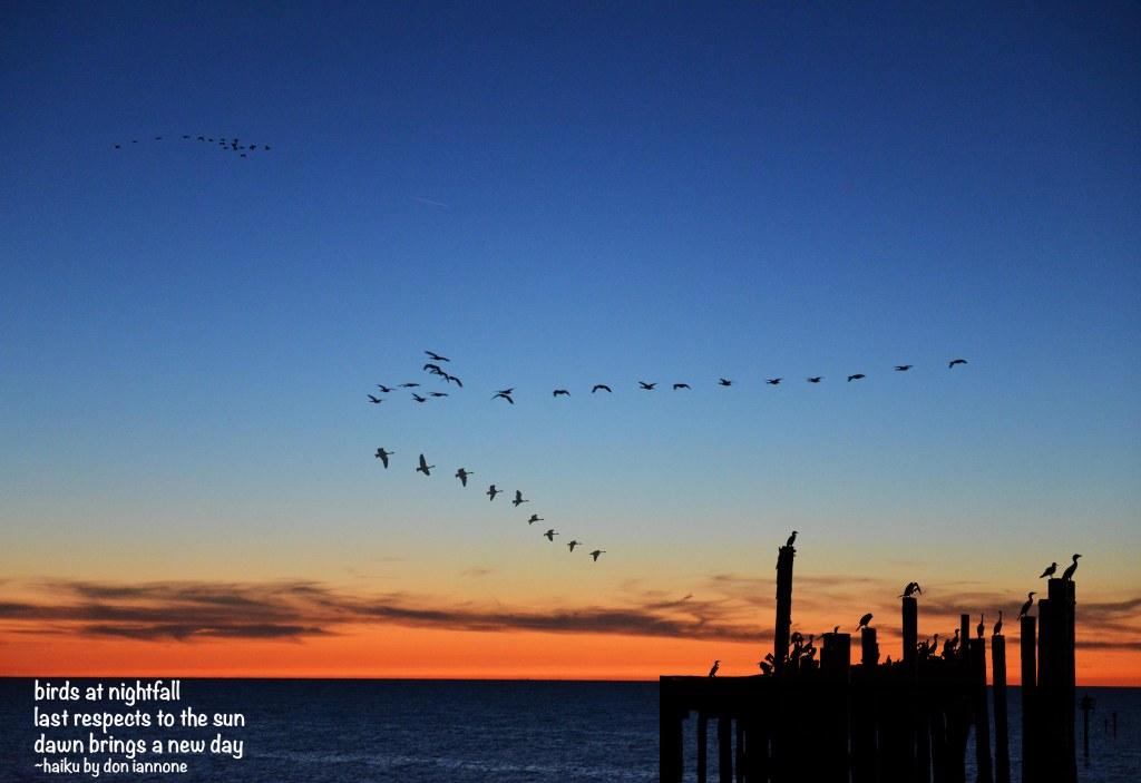 Birds at Nightfall